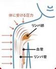 リンパの流れにより血液を促進する